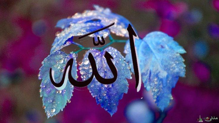 Allah ehtiyacsızdır. Bəs niyə insandan şükür etməsini istəmişdir?