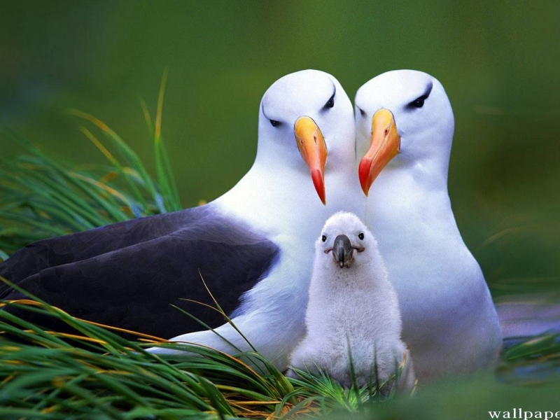 Quşların yaradılışında gizlənən hikmət