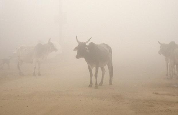 Hindistanda inəyə görə bir müsəlmanı öldürdülər, birini də yaraladılar