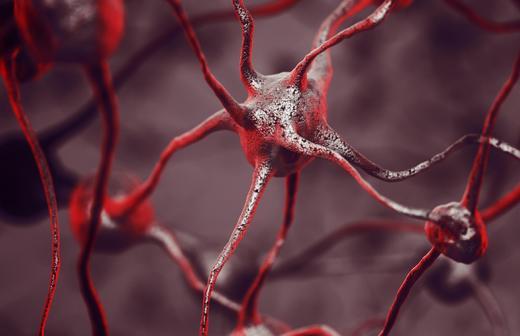 Beyində şüurun yaranma mənşəyi izah edilib
