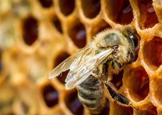 İnsanın və bal arısının ictimai həyatının hansı əsas fərqi var?